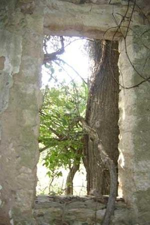 Tree and vines grow in general store ruins in Lime City Texas