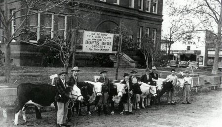 1941 Calf Show in front of Madison County courthouse,  Madisonville Texas