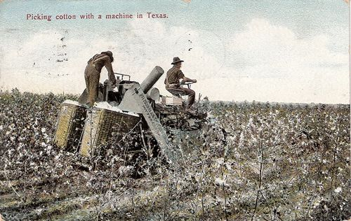 Early TX Cotton picking machine