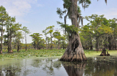 Uncertain Texas - Caddo Lake
