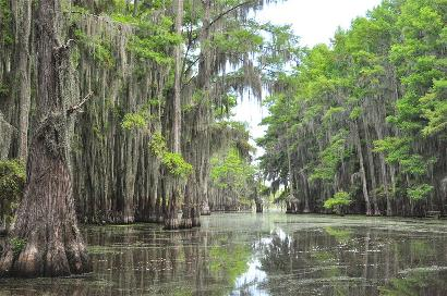 Uncertain Texas - Caddo Lake,  Cypress with Spanish Moss