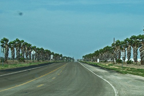 Palm lined Old Military Highway , Texas, by the Rio Grande