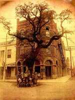Historic Muster Oak in 1900