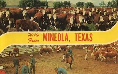 Cows in Mineola, Texas