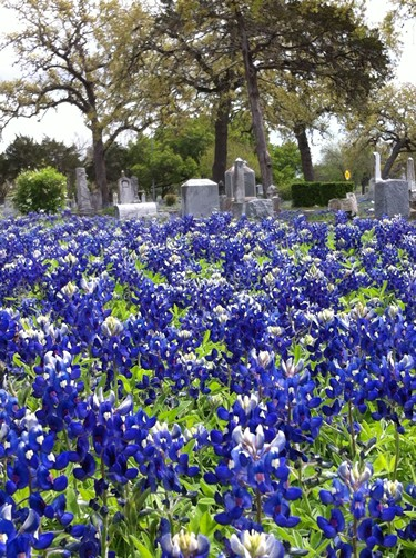 Fayette County TX wildflowers - bluebonnets in cemetery