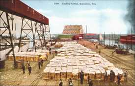 Loading cotton, Galveston, Texas
