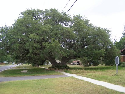 Kyle Auction Oak, Kyle Texas